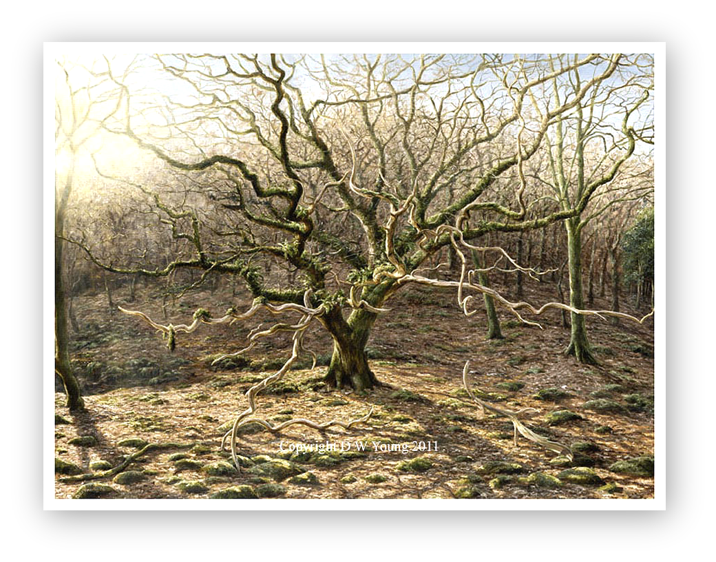The Oak painting by David William Young