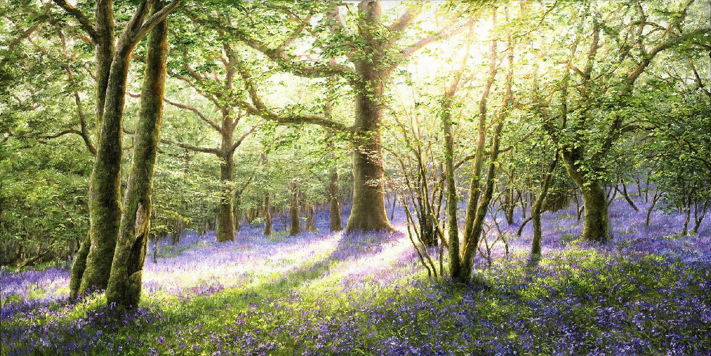 Bluebell Wood, Meldon, Dartmoor David Young artist