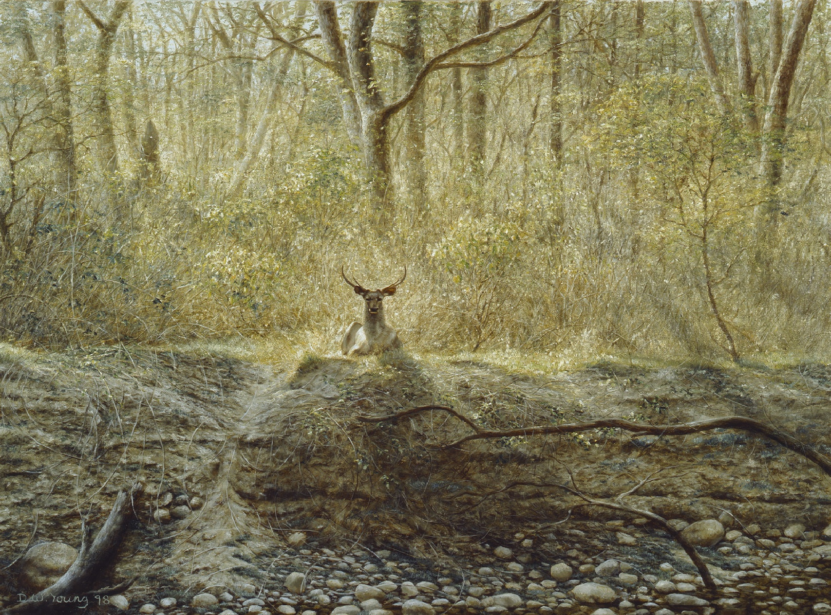 Sambar Deer paintings David William young artist