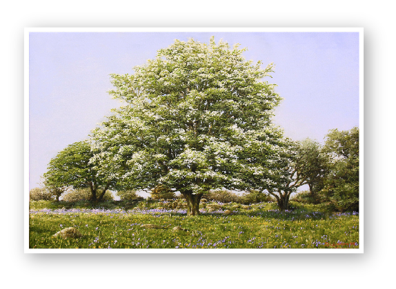 see details May Blossom, a Dartmoor Spring by Dartmoor artist David W Young