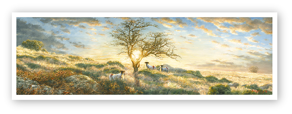 Hawthorn in a Dartmoor sunset painting