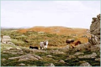 print hound tor dartmoor david young paintings