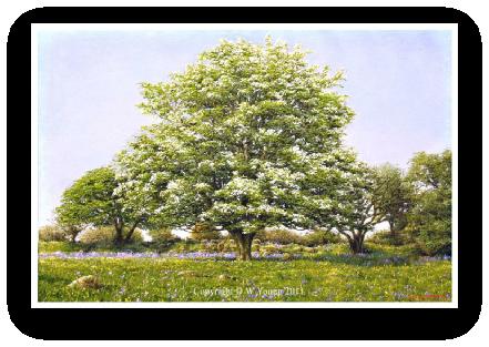 May Blossom, Dartmoor painting by David Young