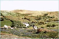 print west dart in spring dartmoor david william young paintings