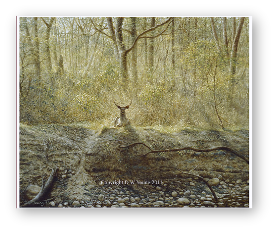 Sambar Deer, India painting by David W Young