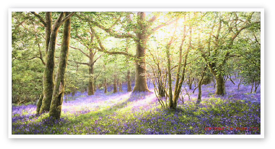 Bluebell Wood, Meldon, Dartmoor print enlargement