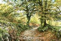 print norsworthy lane burrator dartmoor david young paintings