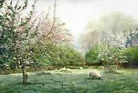 prints orchard blossom tamar valley david young paintings