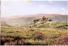 print august heathers  bonehill rocks dartmoor david young paintings