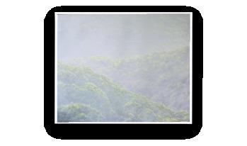 A Dartmoor Rainforest,