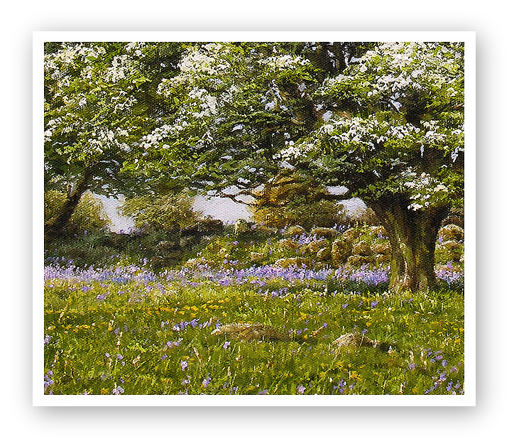 May Blossom, a Dartmoor Spring detail