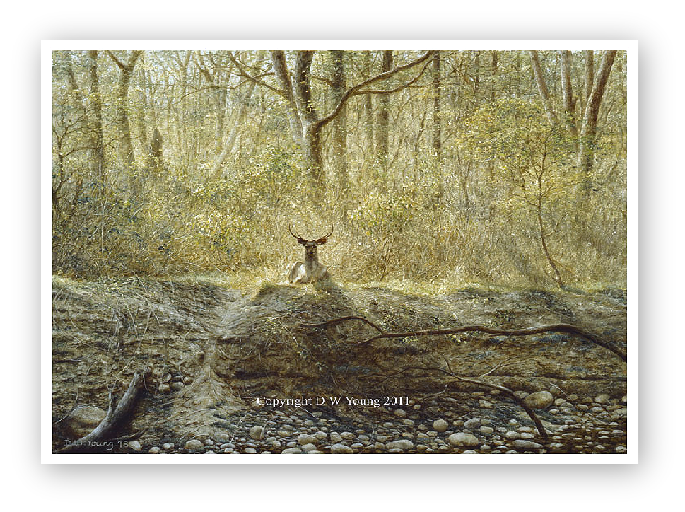 Sambar deer painting by David Young