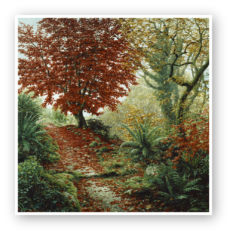 Acer Palmatum painting by David W Young