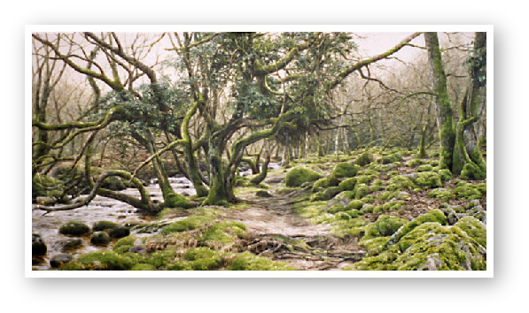 The River Taw below Belstone painting by David W Young
