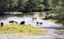 prints long summer days river tamar david young paintings