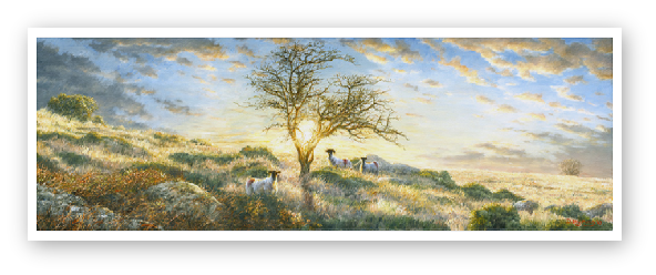 Hawthorn in a Dartmoor Sunset  painting by David William Young