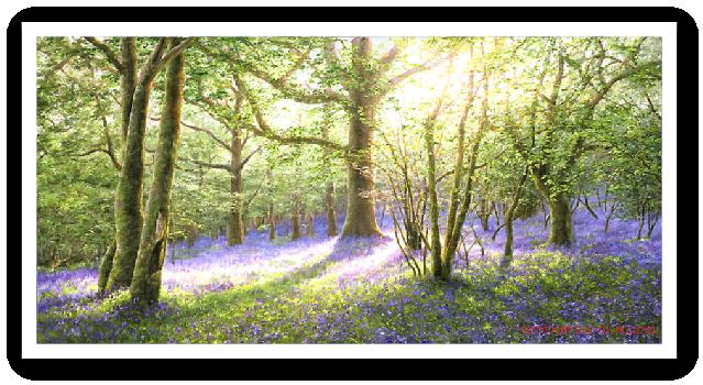Bluebell WoodDartmoor painting