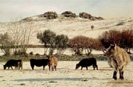 print winter grazing pew tor dartmoor david william young paintings