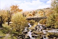 prints bluebell dartmeet dartmoor david young paintings