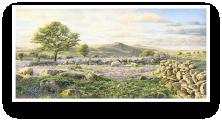 See dartmoor Prints