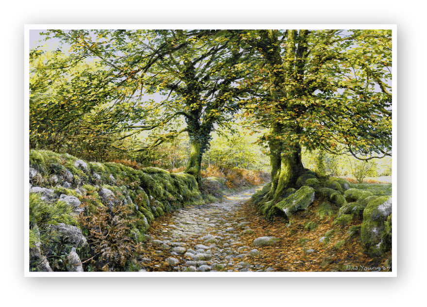 Norsworthy Lane, Burrator, Dartmoor